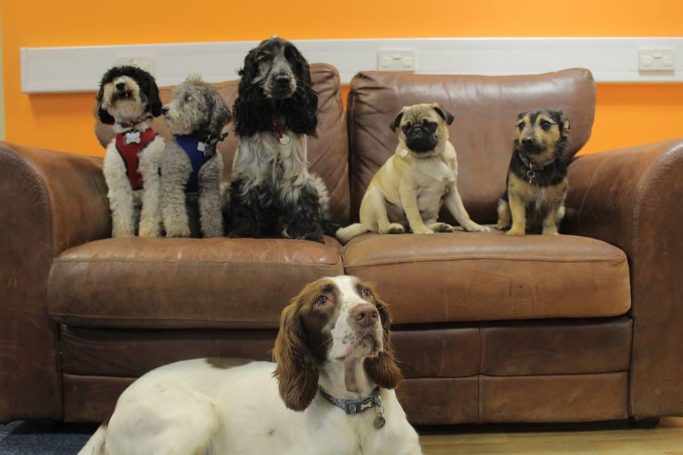 dog boarding dog daycare Telford