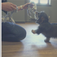 Online Training Class: Puppy 101 Part 2 - Starting out, Feeding, Toileting, Separation & Whining