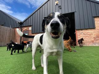 Resocialising your dog Post-Lockdown