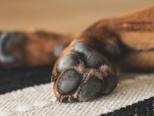 Your Dog's Paws