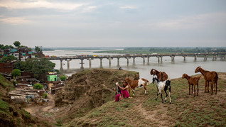 An Indian woman tends to her goats grazing on the mounds by the site of Jajmau which archaeologists believe was once the fort of powerful King Yayati, situated on the banks of the river Ganges in Kanpur, India, Tuesday, June 23, 2020. For more than 1,700 miles, stretching from the Gangotri Glacier in the Himalayas to the Bay of Bengal, the Ganges flows across the plains like a timeline of India's past, nourishing an extraordinary wealth of life. It has seen empires rise and fall. It has seen too many wars, countless kings, British colonials, independence and the rise of Hindu nationalism as a political movement.