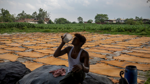 An Indian worker drinks water as processed rawhide are laid to dry at a tannery in Kanpur, an industrial city on the banks of the river Ganges known for its leather tanneries and relentless pollution, in the northern Indian state of Uttar Pradesh, India, Wednesday, June 24, 2020. Kanpur city produces an estimated 450 million liters of municipal sewage and industrial effluent daily, much of which flowed directly into the Ganges until recently. Today that number is lower, though it's not clear by how much, after a Ganges cleanup project closed some drains and diverted industrial pollution to treatment plants.