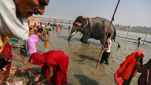 Devotees take ritualistic dips alongside elephants at the confluence of river Ganges and river Gandak to mark the beginning of the centuries old Sonpur mela, the largest cattle fair in Asia, in the Indian state of Bihar, Tuesday, Nov. 12, 2019. Sonpur was once a place along the Ganges where powerful beasts like elephants were traded in large numbers. The number of elephants seen at the fair reduced drastically after a ban on their sale citing the Wildlife Protection Act. Only a handful are now brought by the administration to the festival in order to keep the Hindu tradition alive and also to add value to the fair as a tourist attraction.