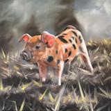 This little piggy (piglet)