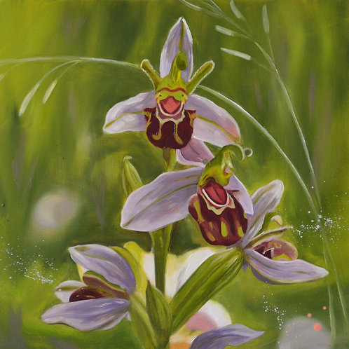Bee Orchids Flowers