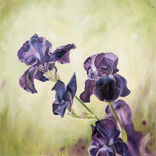 Verity (purple irises)