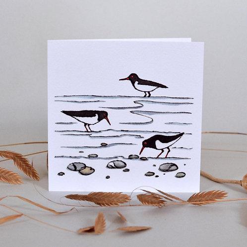 Card Oystercatchers