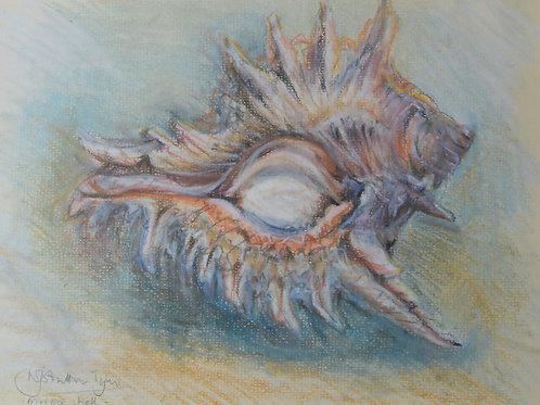 Murex Shell Painting