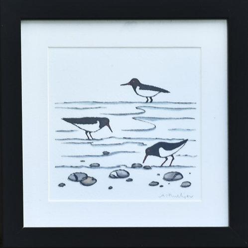 Framed Oystercatchers