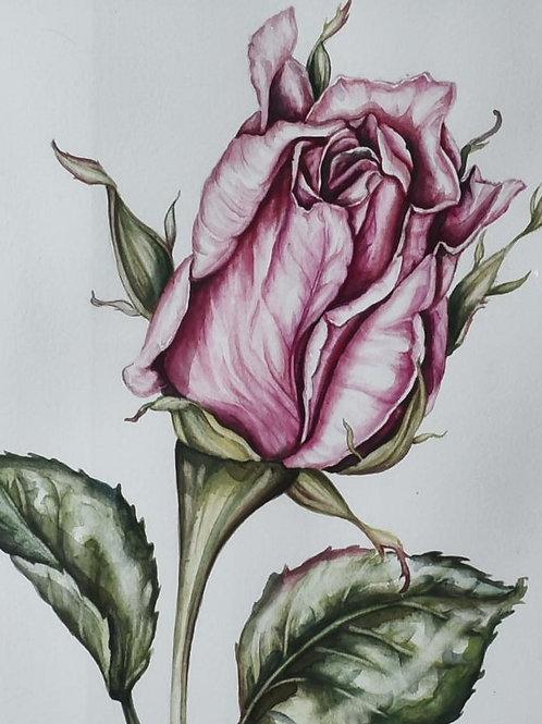 Rosebud Botanical Painting