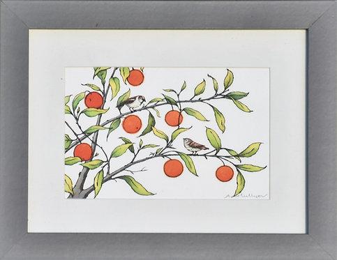 Framed Orange Grove