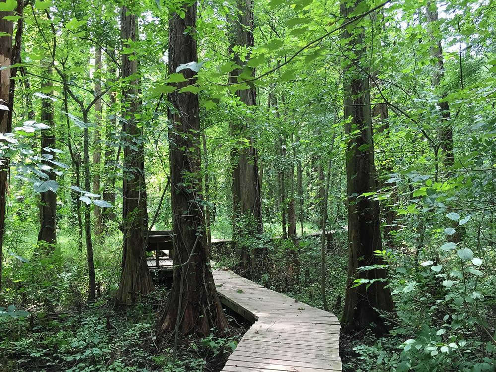 Battle Creek Cypress Swamp Trail