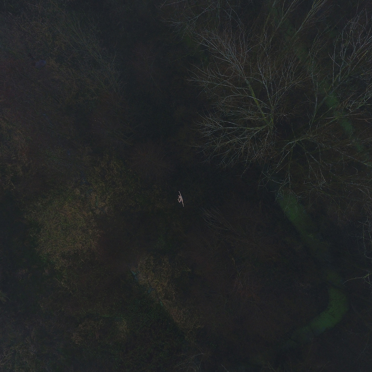 Clara, fog, dark forest