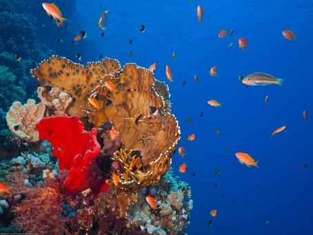 Parcel de Manuel Luís: onde o mar ainda está pra peixe!
