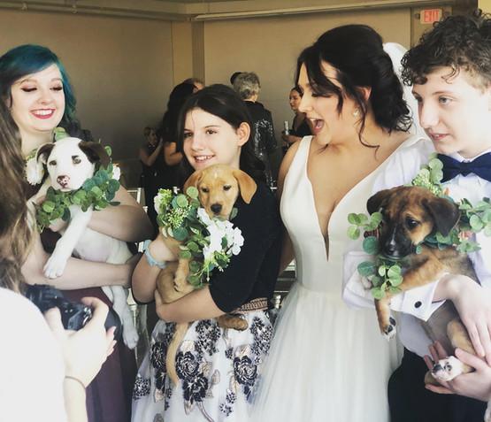 Wedding Ceremony with PUPPIES!
