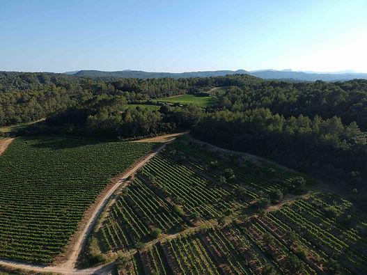 * img - vineyards front DJI_0118 kopie.jpg