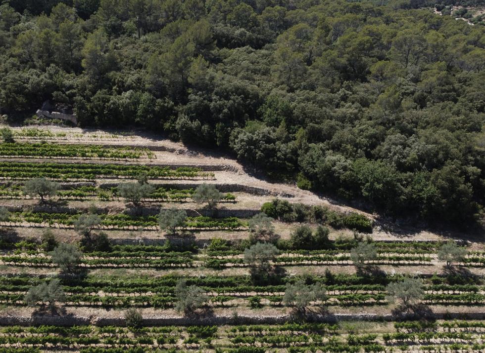 Chateau Camparnaud Provence - winery / vineyard