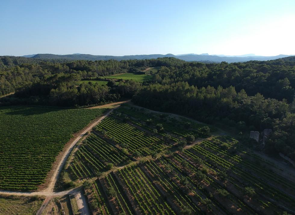 Chateau Camparnaud Provence - vineyard