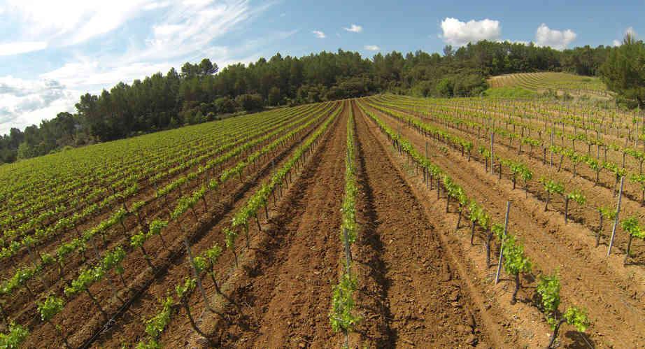 vineyard 4.JPG