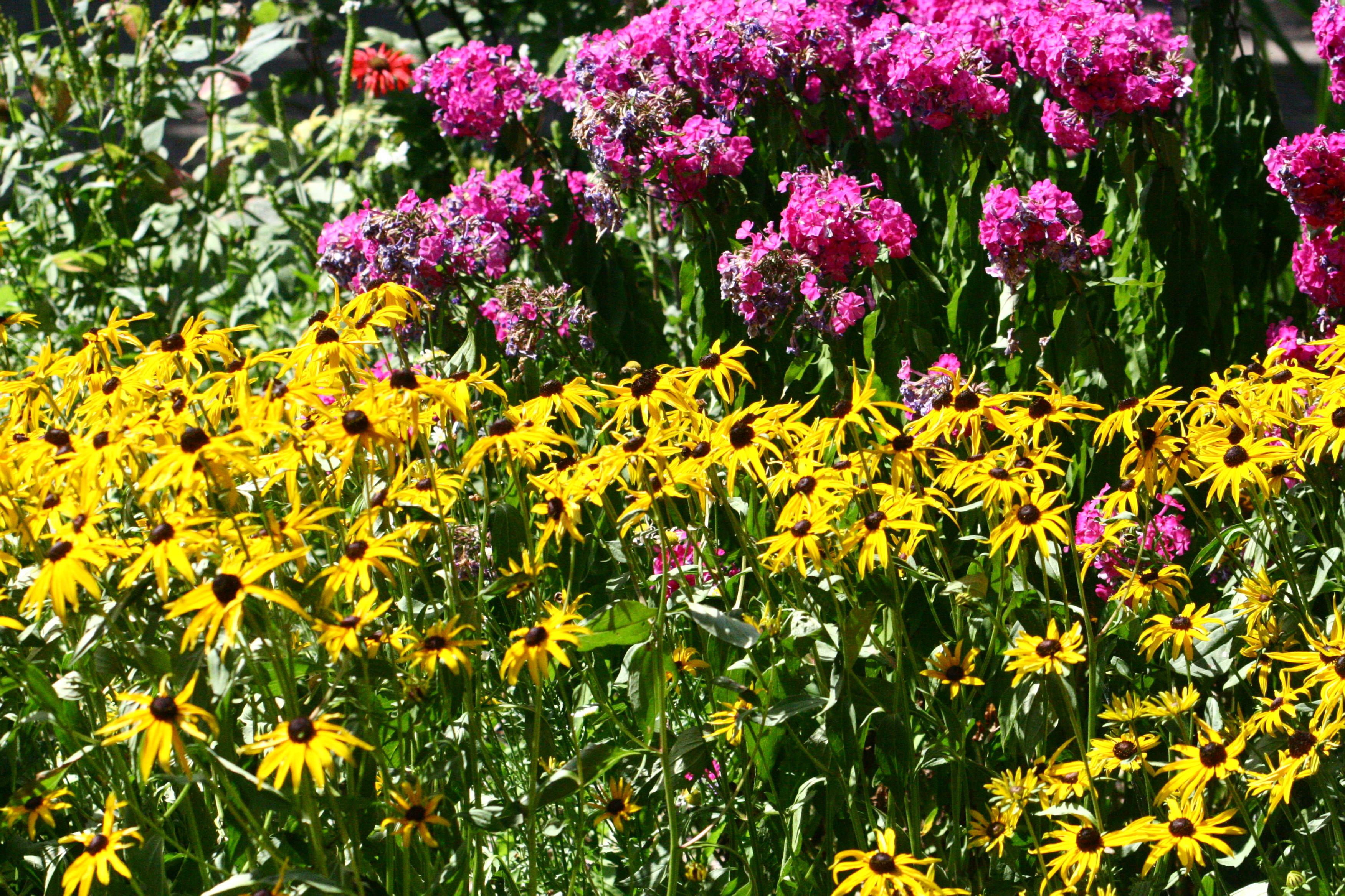 À Fleur de Fleuve bedflowers