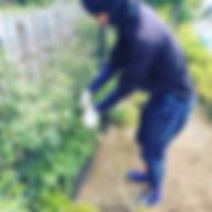 フェンスのつる草 埼玉・東京のマルニシ造園