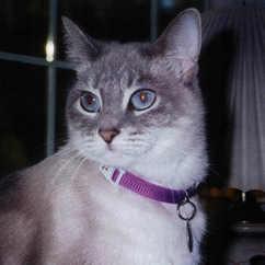 61. Prissie