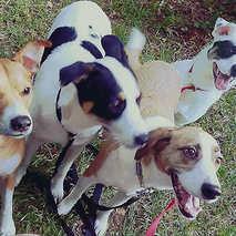 14. Ava, Bailey, Dexter & Comet