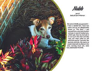 9. September - Nubb.jpg