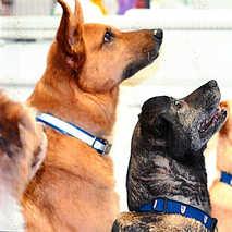 22. The Canine Choir