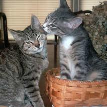 16. My Kitten & Bashful