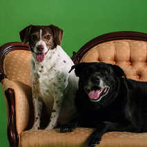 48. Maggie & Pickwick