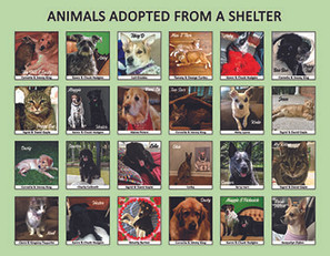 Shelter Page.jpg