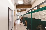 CVHS Adoption Dogs 3 (1)_edited.jpg