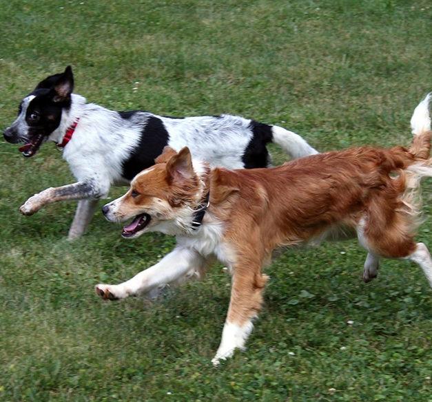 Area Dog Parks