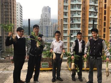 參與校園耕作大賽,學生親身動手耕作,學習「一分耕耘一分收穫」的道理