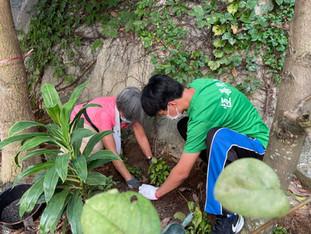 長幼共融 - 携手在校園種植馬藍