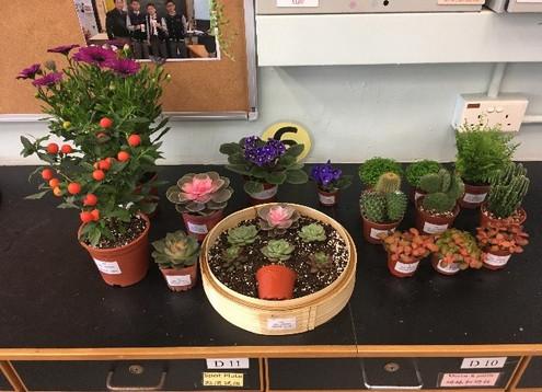 參與香港花卉展覽比賽,透過準備花卉學習欣賞大自然