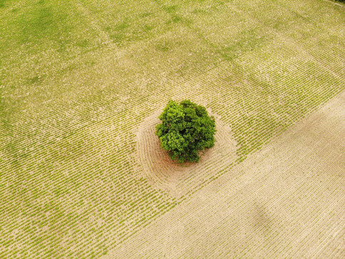 Crops and the Tree