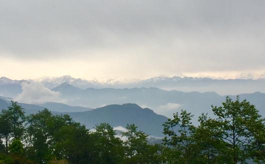 Himalayans