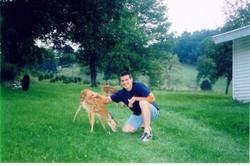 A Friendly Baby Deer