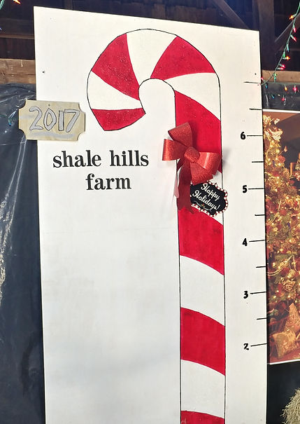 cut your own shale hills farm nj candy c