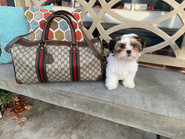 Gucci Weekender Bag