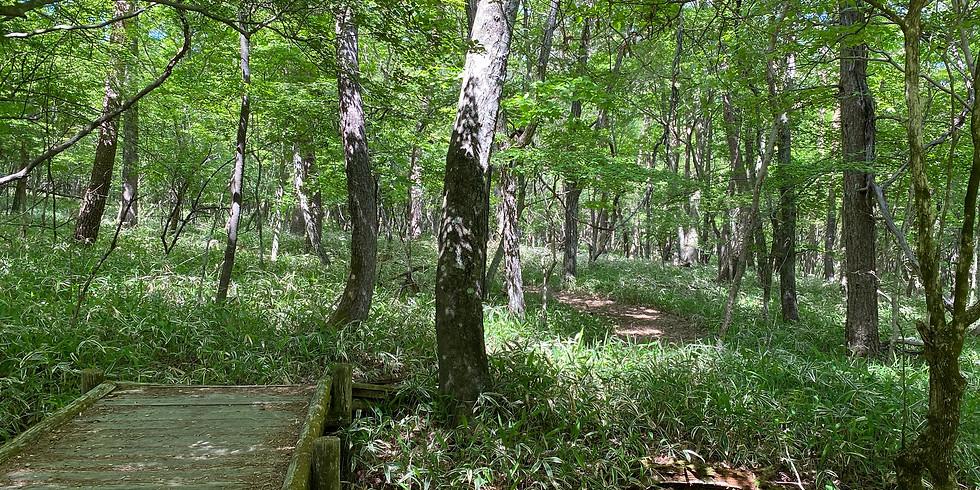 【午後】森林浴でリフレッシュ!清里の森でショートウォーク