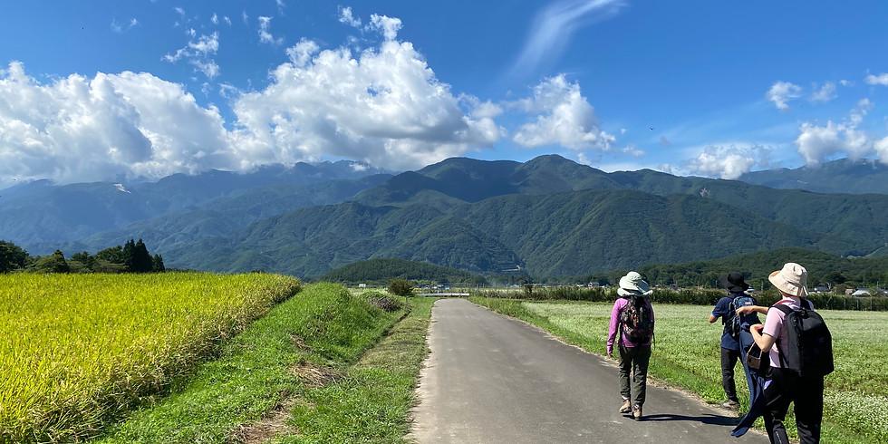 【午後】小淵沢~富士見 花のそば畑と稲穂のみち ゆるりウォーク