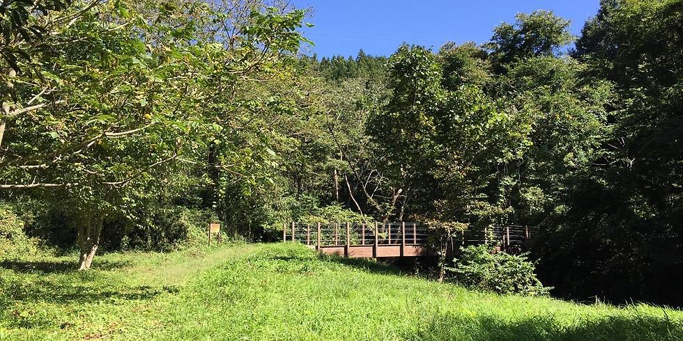 【開催中止】5/25(月) 北杜 オオムラサキ自然観察路を歩こう! (1)