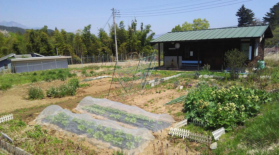 plantation0.jpg