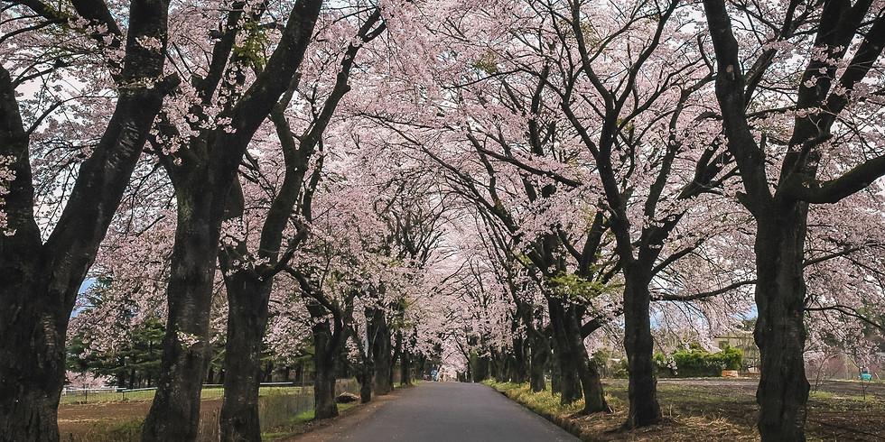 【開催中止】ロング北杜 むかわの里桜めぐり!