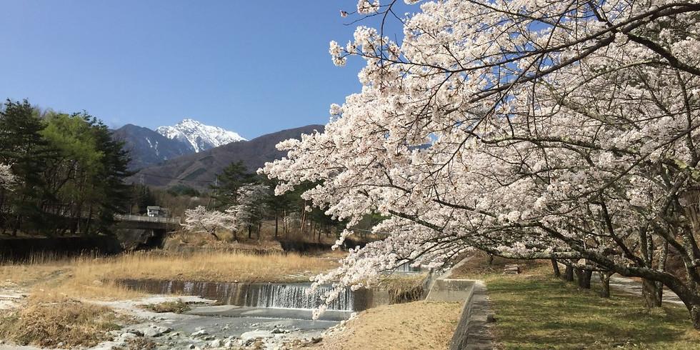 【午前】 北杜 白州の桜と台ヶ原宿
