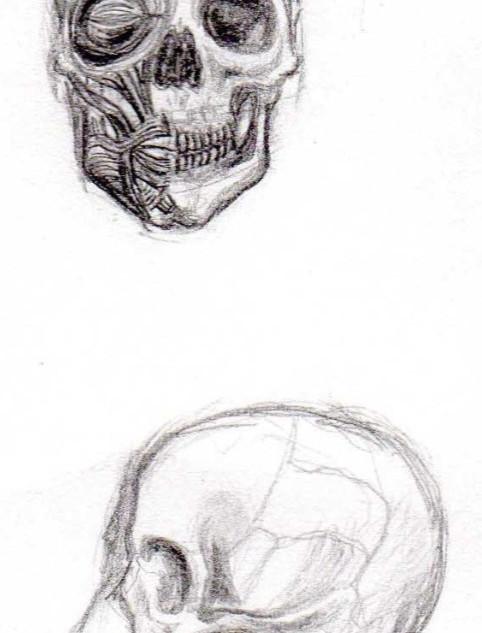 Studies in anatomy