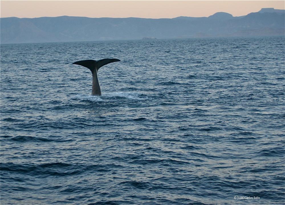 03 18 10 Isla San Jose 239.jpg